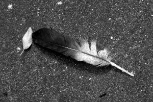 enileni-pixabay-spring-876550_1920