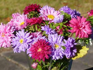 tingeling-pixabay-flowers-1720327_1920