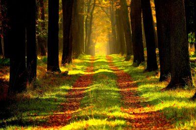 ersi-pixabay-forest-868715_1920